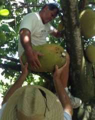 Michael-Luciano-handing-a-jackfruit-to-David-White30q