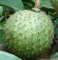 Mountain Soursop