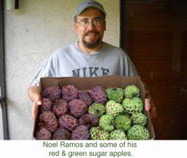 noel-ramos-annona